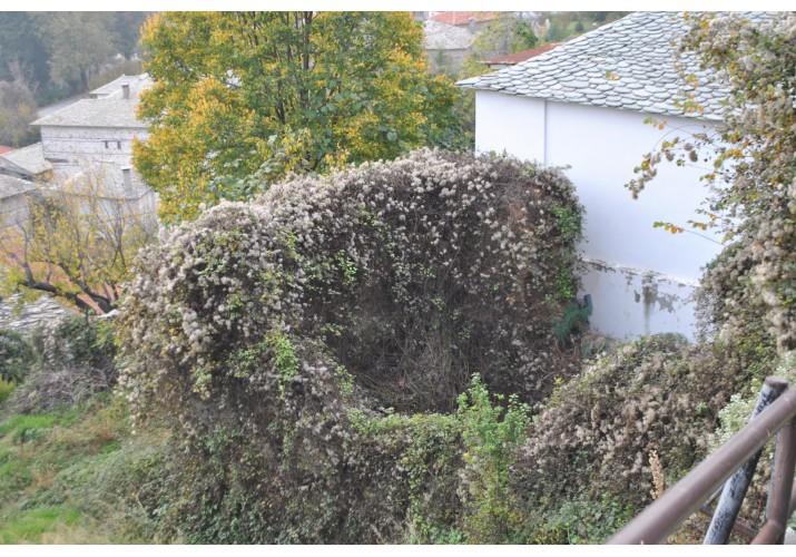 Ερείπιο που έχει καλυφθεί απο βλάστηση.